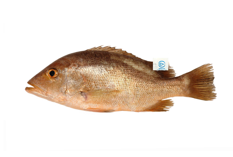 魚類 - Fish - JapaneseClass.jp